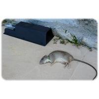 Nooski patkányfojtó