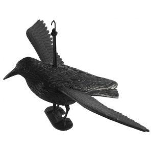 Kitárt szárnyú varjú 36x60x23