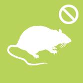 Patkányirtás és riasztás